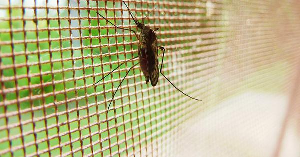 Okenní sítě proti hmyzu