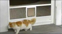 pantová dveřní s průlezem pro kočku
